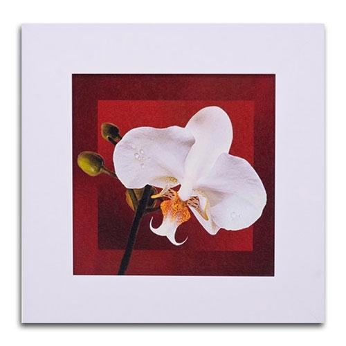 Quadro Decorativo Flor e Fundo Vermelho II em Madeira - 46x46 cm