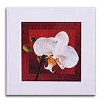 Quadro Decorativo Flor e Fundo Vermelho II em Madeira