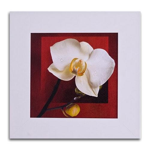 Quadro Decorativo Flor e Fundo Vermelho em Madeira - 46x46 cm
