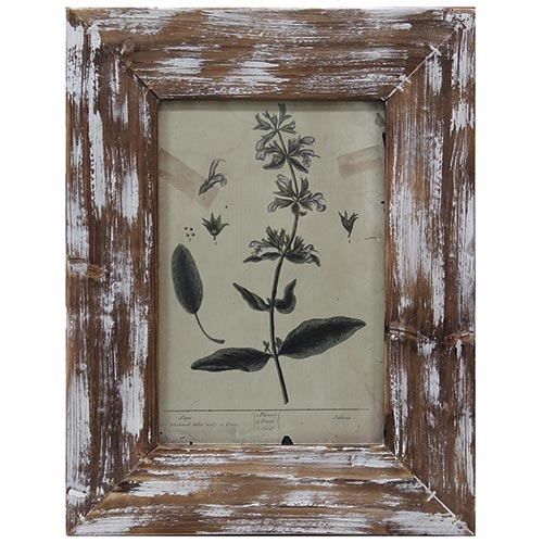 Quadro Flor Delicate Moldura Antique Oldway - 46x35 cm