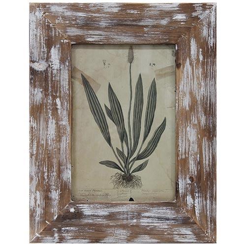 Quadro Folhagem Moldura Madeira Antique Oldway - 46x35 cm