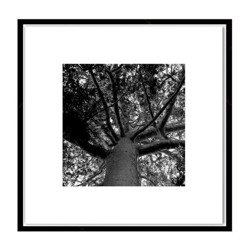 Quadro Galhos de Árvore Preto e Branco Impresso em MDF - 50x50 cm