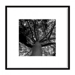 Quadro Galhos de Árvore Preto e Branco Impresso em MDF