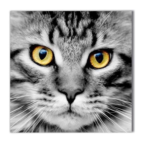 Quadro Olhar do Gato Preto e Branco Impresso em MDF - 50x50 cm