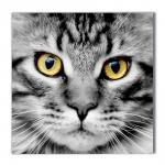 Quadro Olhar do Gato Preto e Branco Impresso em MDF
