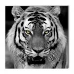 Quadro Olhar do Tigre Preto e Branco Impresso em MDF