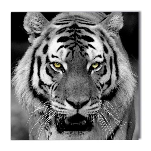 Quadro Olhar do Tigre Preto e Branco Impresso em MDF - 50x50 cm