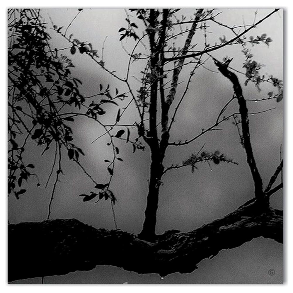Tela Galhos Preto e Branco Impressão em Tecido Estrutura em Madeira - 50x50 cm