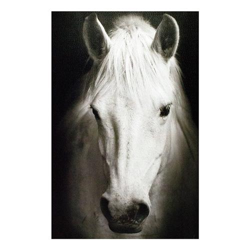 Tela Impressa Cavalo Branco Fullway - 120x80 cm