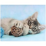 Tela Impressa Gato Deitado c/ Bola de Vime Fullway - 40x50 cm 29