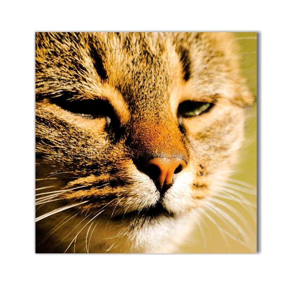 Tela Olhar do Gato Impressão em Tecido Estrutura em Madeira - 50x50 cm