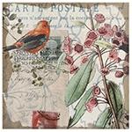 Tela Pássaro Vermelho Cartão Postal Oldway - 80x80 cm