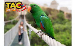 TAC Turismo: Tour Full day Parque Tricao y Pomaire - Cuponatic
