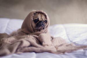 funny dog in kitsilano