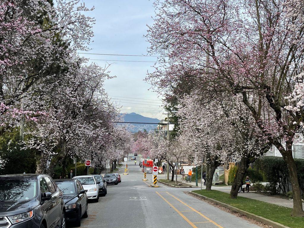 Spring in Kitsilano