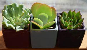 kitsilano plants
