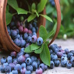 Alabama Blueberry Festival 2020