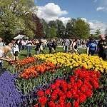 Albany Tulip Festival 2020