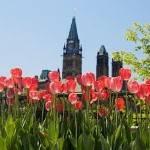 Canadian Tulip Festival 2020