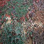 Catalan Festival 2020