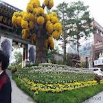 Chrysanthemum Festival 2016