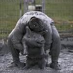 Festival du cochon de Sainte Perpetue 2020
