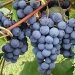 Flying Fez Wine Tasting Festival 2020