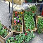Garden Fair & Plant Sale 2018