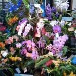 Heart O' Texas Orchid Society's Show and Sale 2020