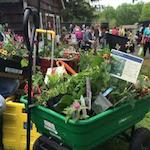 Herb and Garden Fair 2020