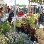 Herb and Plant Festival 2017