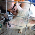 Hernando County Fair & Youth Livestock Show 2019