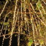 Holiday Lighting of the Banyan Tree 2018