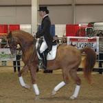 Idaho Horse Expo 2017