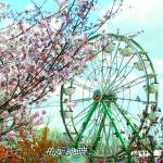 International Cherry Blossom Festival 2018
