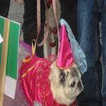 K9 Karnival 2018