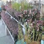 Klamath Basin Home and Garden Show 2019