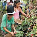 Kona Coffee Cultural Festival 2016