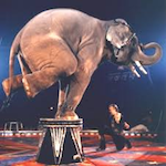 Kosair Shrine Circus 2017
