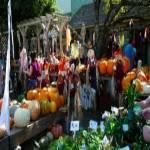 Ocean Grove's Fall Harvest Festival 2021