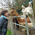 Open Alpaca Barn 2017