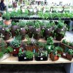 Painters Greenhouse Annual Herb Festival 2019