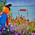 Phelps Scarecrow Fest 2021