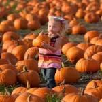 Pumpkin Festival 2021