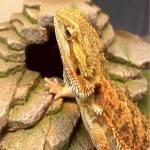 Repticon Baltimore Reptile & Exotic Animal Expo 2020