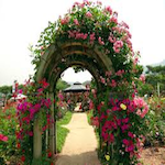 Rose Garden Festival 2022