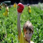 Summer Camp @ Murray Family Farms 2020
