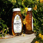 Tupelo Honey Festival 2020