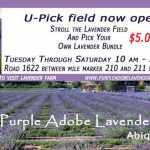 U-Pick Lavender Fields Open Now! 2020