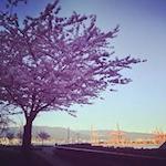 Vancouver Cherry Blossom Festival 2020
